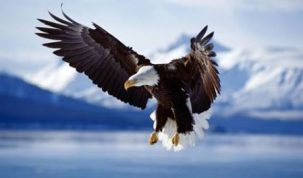 ecția bătrânului vultur Lecția bătrânului vultur Lecția bătrânului vultur