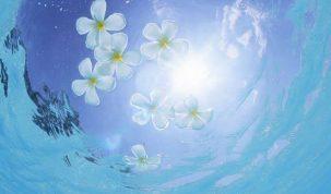 Sinceritate, editorial de Ileana Vlăduț – terapeută BFRP remedii florale Bach
