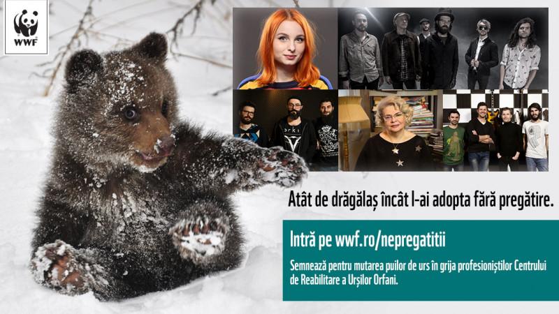 Cum poţi ajuta singurul orfelinat pentru puii de urs din Europa, aflat în România