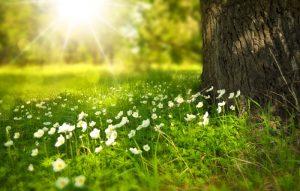 Primăvara și reînnoirea oamenilor - Aivanhov - Tot Ceea Ce Este